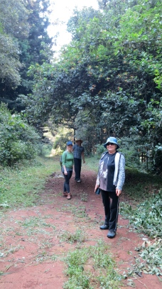 Fagan Forest walk Kenya