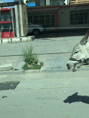 Not unusual to find donkey and carts in the capital